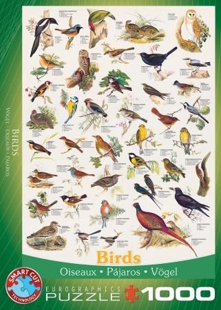 Eurographics Birds