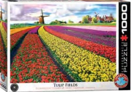 Eurographics Tulip Fields Netherlands