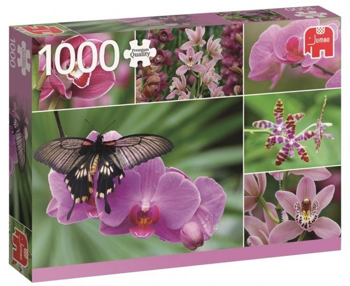 Jumbo PC Holland Orchids