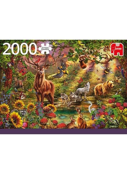 Jumbo Magic forest at sunset - 2000 stukjes