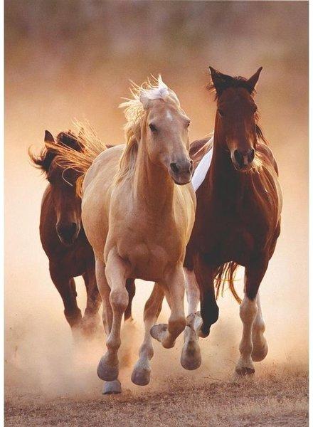 Clementoni Clementoni Puzzel High Quality 1000 stukjes Rennende paarden