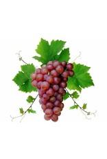 DeOliebaron  Druivenpit Massage Olie 500 ml