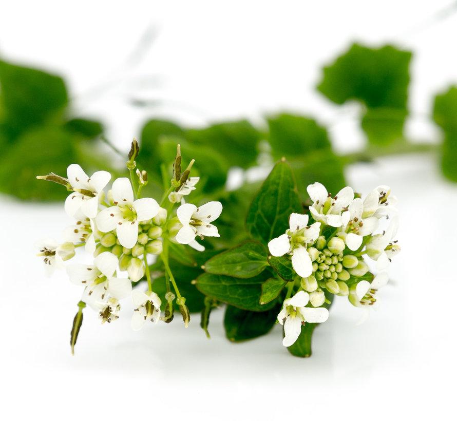Dutch Wasabi® Flowers