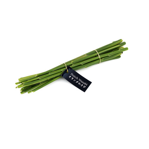 Dutch Wasabi Ginger stems 10pcs