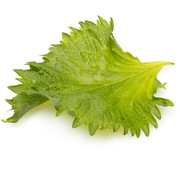 Dutch Wasabi Shiso Leaves Green 20 st