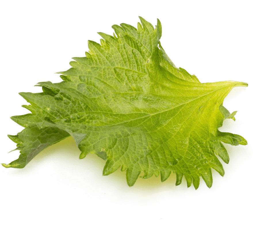 Groene Shiso bladeren 20 st