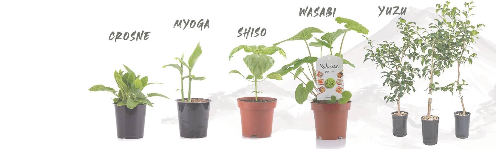 Uw Japanese eetbare tuin