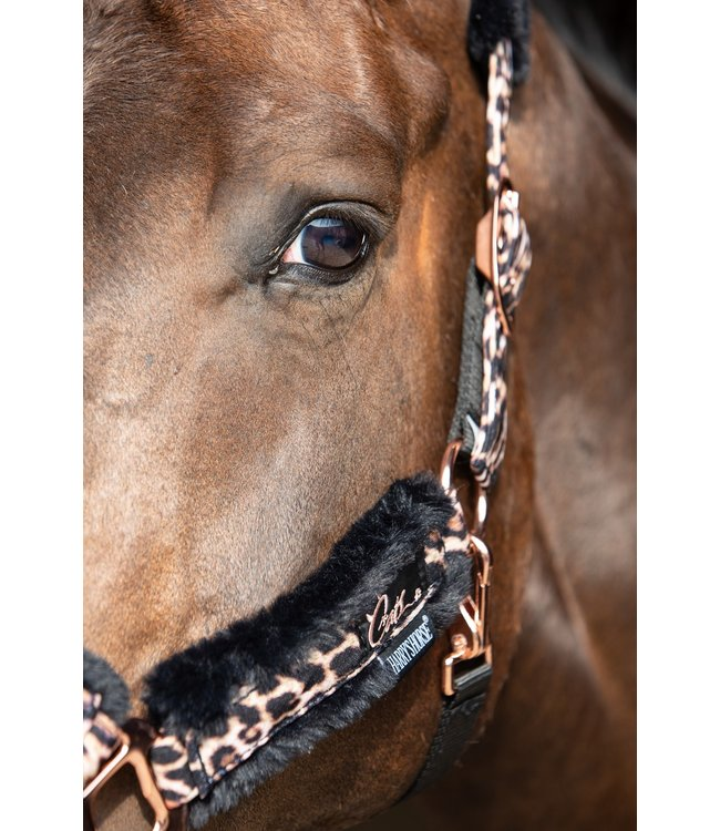 Harry's Horse Halter set Cats