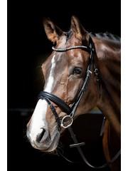Harry's Horse Bridle Fiesta