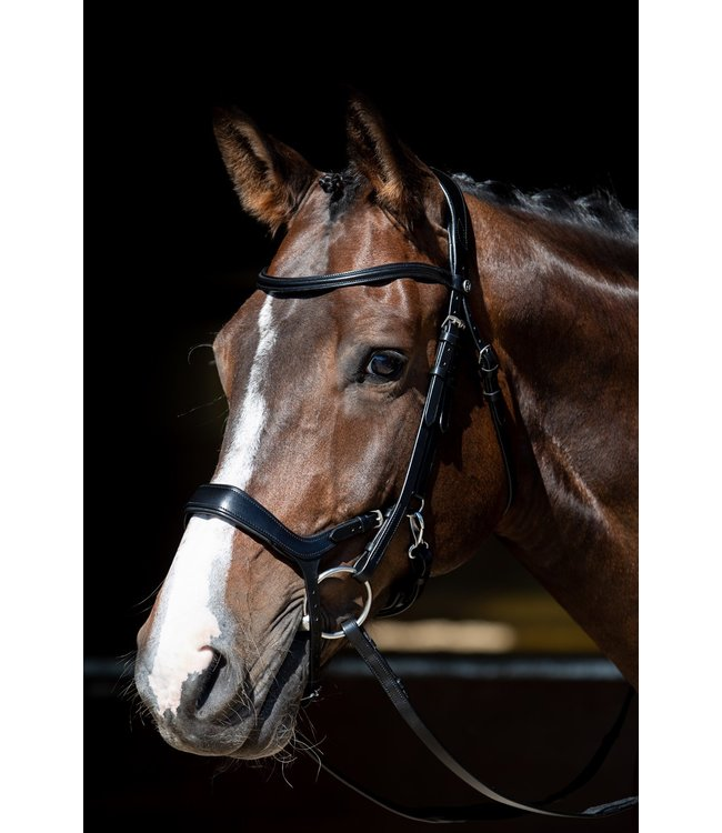 Harry's Horse Bridle Release