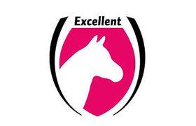Excellent Horse