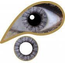 Mesmereyez 3 Month FIFTY SHADES  EYE ACCESSORIES