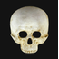 Teschio Skull