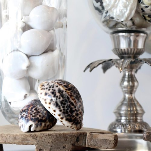 Bazar Bizar Decoratie The Cowrie Shell - Bruin