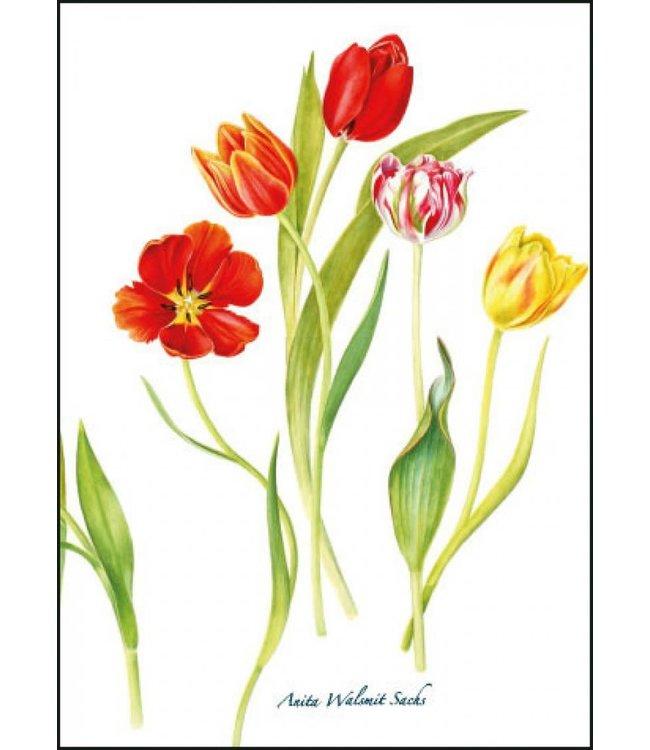 Bekking & Blitz   Anita Walsmit Sachs   Tulips
