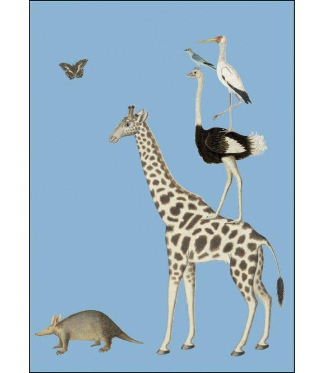 Bekking & Blitz   Robert Jacob Gordon   Giraffe