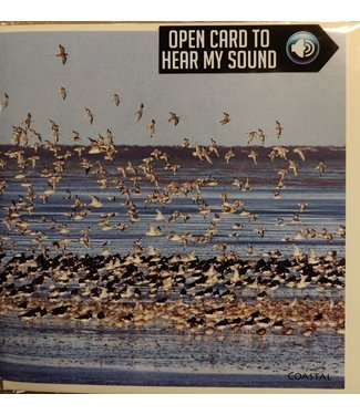 Really Wild Cards Really Wild Cards | Wenskaart met Geluid  | Birds | Zwerm vogels aan de Kust