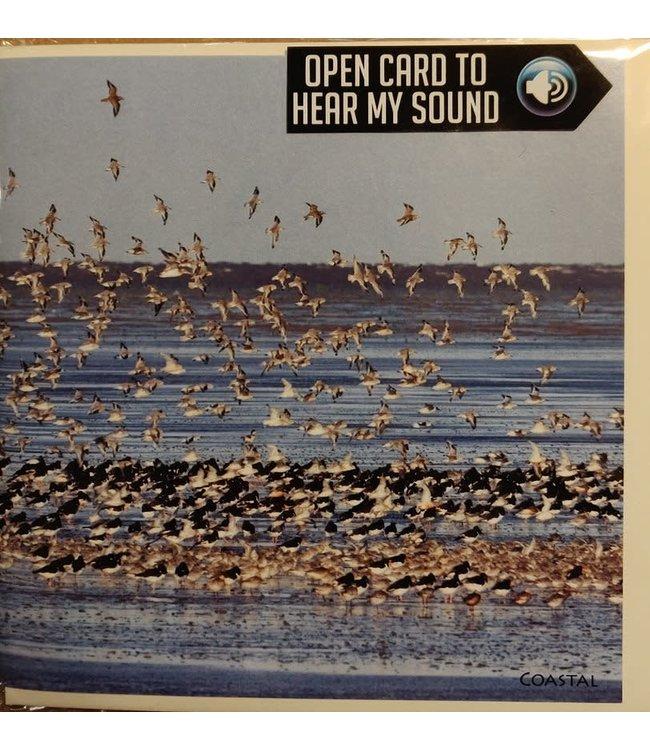 Really Wild Cards | Wenskaart met Geluid  | Birds | Zwerm vogels aan de Kust