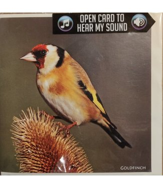 Really Wild Cards Really Wild Cards | Wenskaart met Geluid  | Birds | Putter