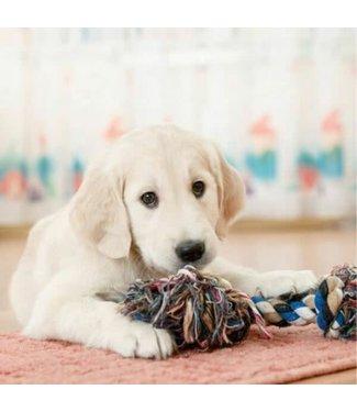 Really Wild Cards Really Wild Cards | Wenskaart met Geluid  | Adorable | Retriever Pup