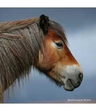 Really Wild Cards Really Wild Cards | Wenskaart met Geluid | Down on the Farm | Dartmoor Pony