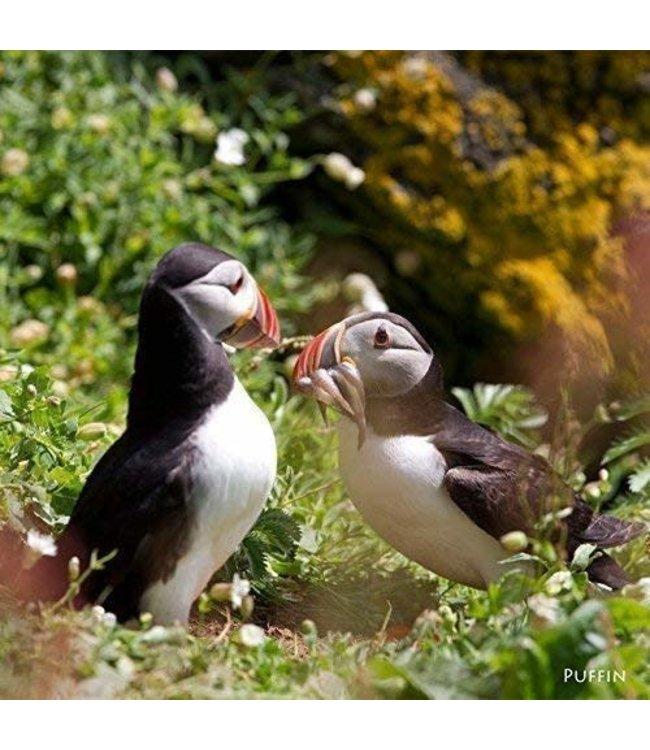 Really Wild Cards   Wenskaart met Geluid    Birds    Twee Papegaaiduikers