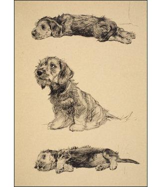 Bekking & Blitz | Cecil Charles Windsor Aldin | Dandie Dinmont pups
