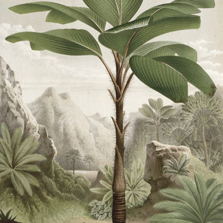 KEK panel Banana Tree