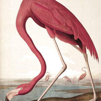 KEK panel Flamingo
