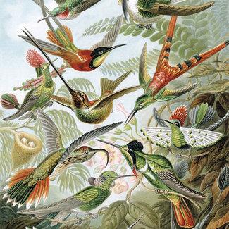 KEK panel Exotic Birds