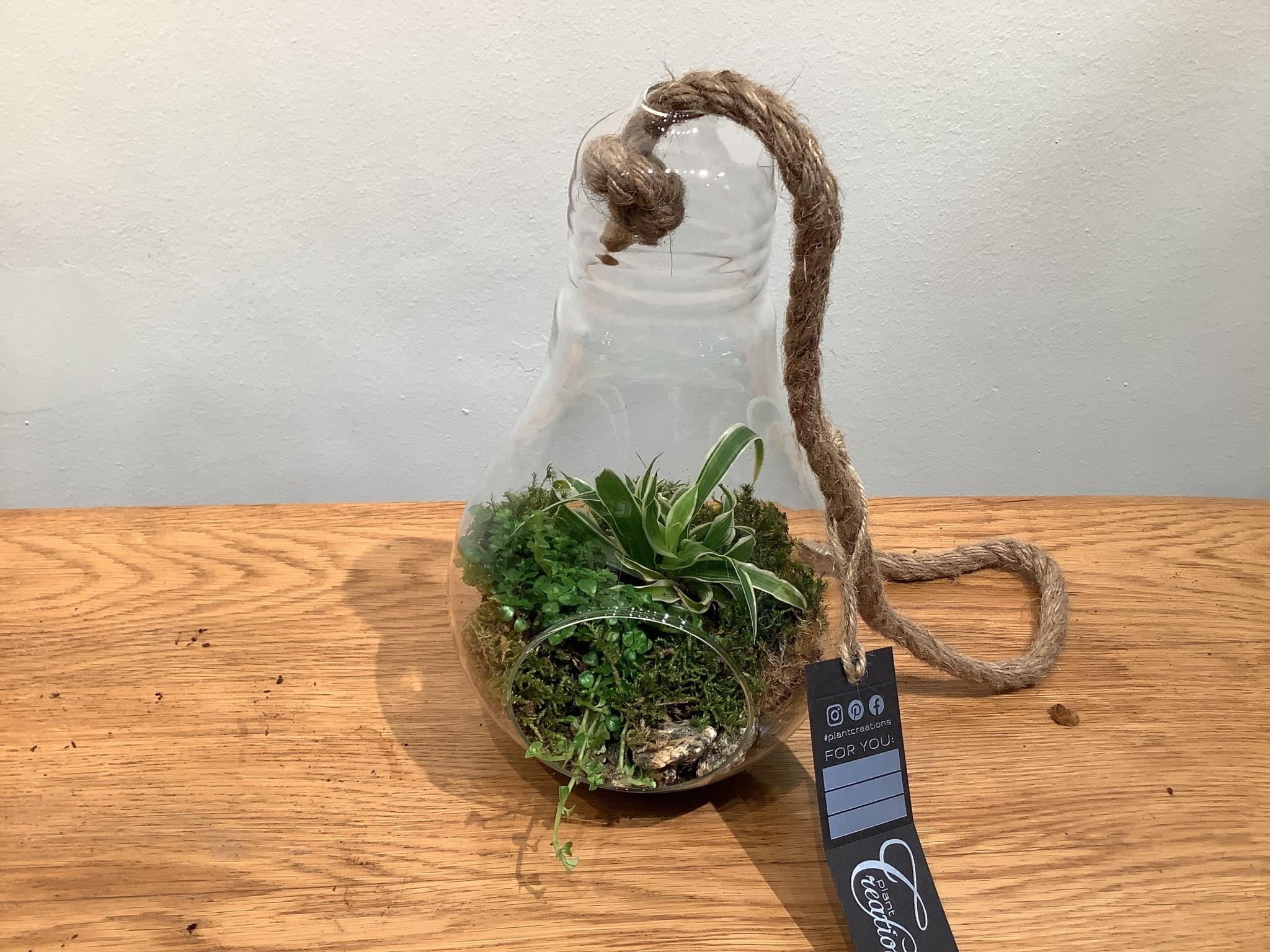 Plantjes in glazen fles    25 cm hoog
