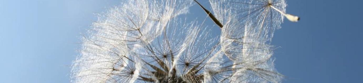 Praktische adviezen voor palliatieve zorg