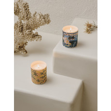 Scented Candle Mimosa