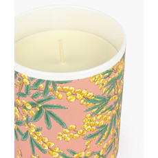 Candle Mimosa