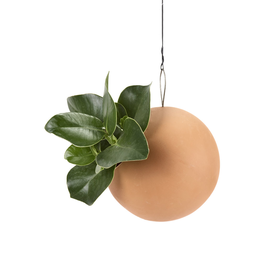 Hanging Pot Terra Cotta (M)