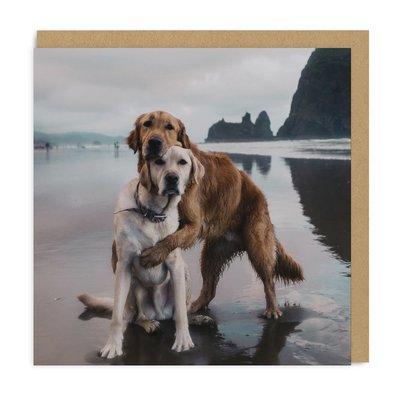 Dogs Hug