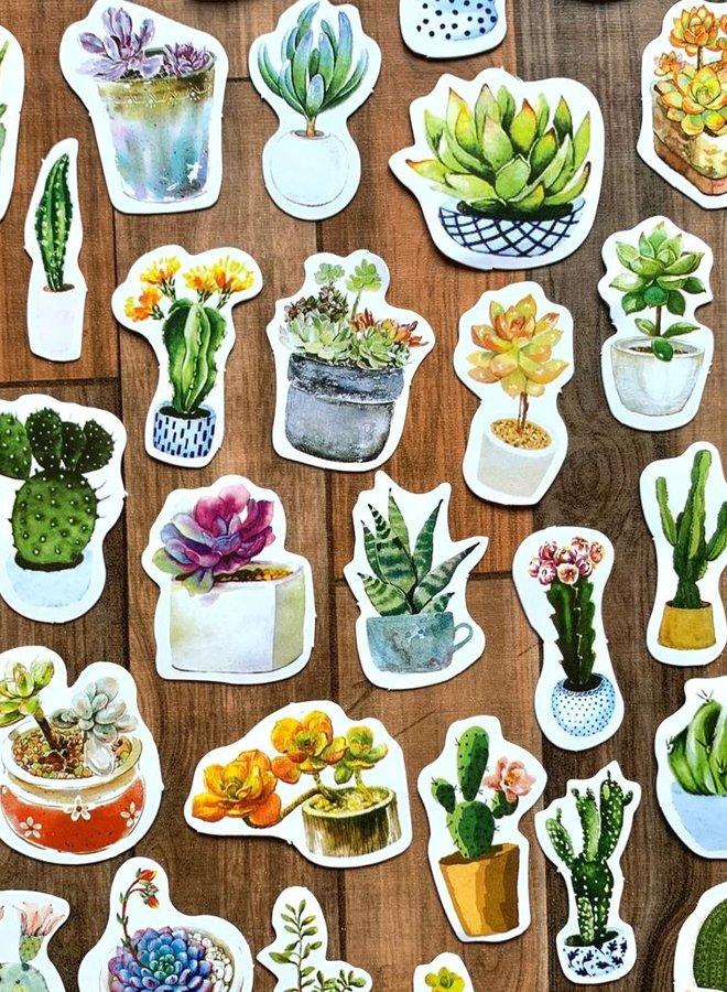 Stickers | Cactussen en vetplanten