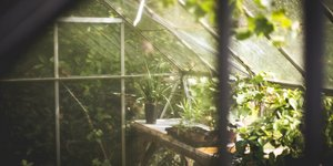 Choose the right nutrients for your growing plants