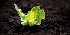 Feeding Your Plants a Balanced Diet