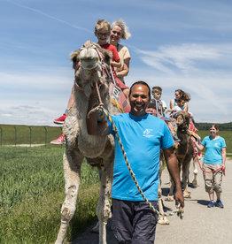 Expérience chameau 1