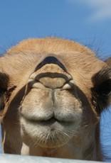 Gutschein für Kamelerlebnis 1