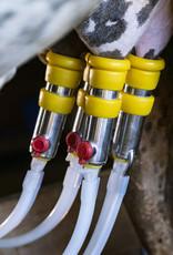 5 Liter Kamelmilch, roh, unbehandelt, tiefgefroren  - Copy