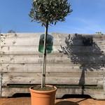 Planten op stam