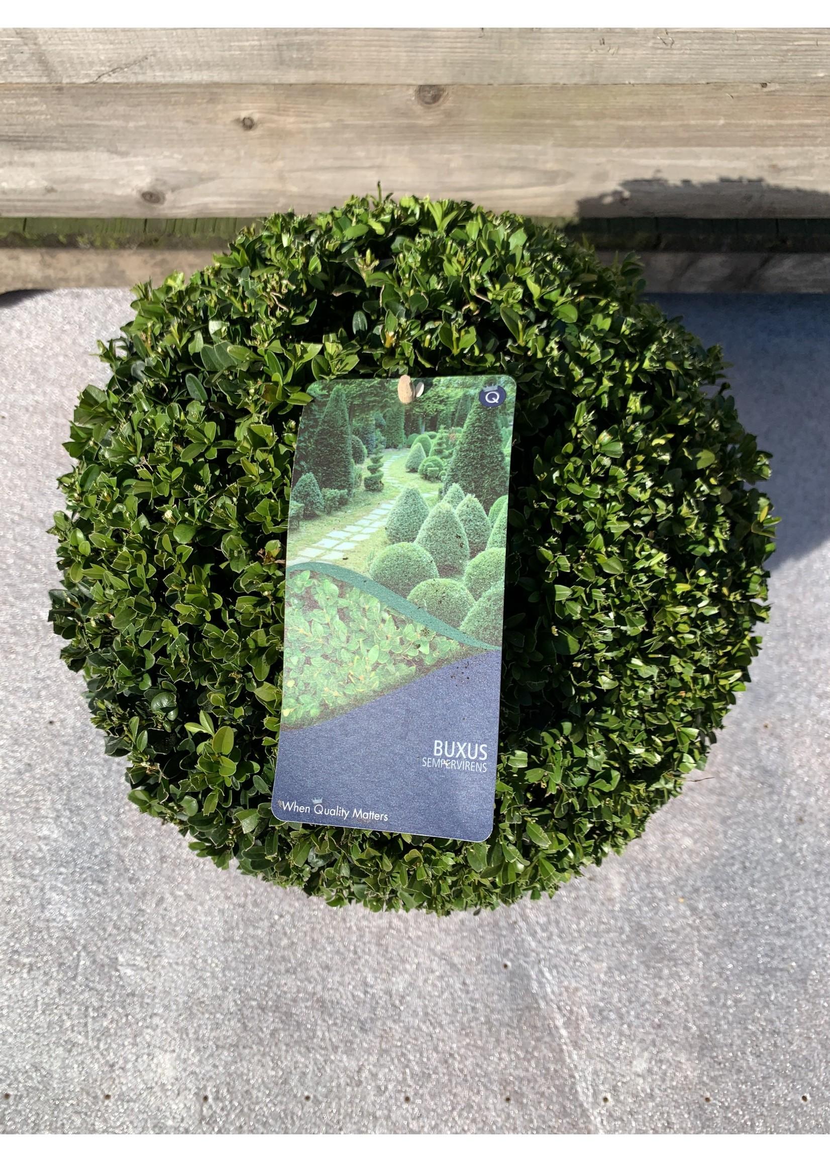 Buxus Buxus semp. Bolvormig 20-25cm.