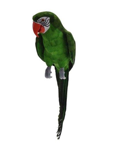 Papegaai groen