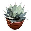 "Agave ovatifolia ""Emerald"" (schaal 25 cm)"