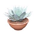 """Agave ovatifolia """"Iced Heart"""" (schaal 40 cm)"""