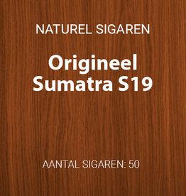 Hoogeboom Sumatra S19