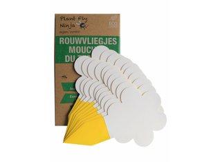 Plant Fly Ninja + Rouwvliegjes 10-pack NL/FR