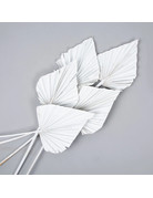 PAMPASKONING PALM SPEARS | WHITE